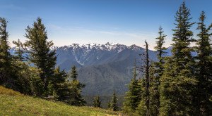 12 Fascinating Things You Probably Didn't Know About The Olympic National Park