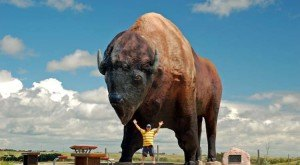 6 Fascinating Things You Probably Didn't Know About The National Buffalo Museum In North Dakota