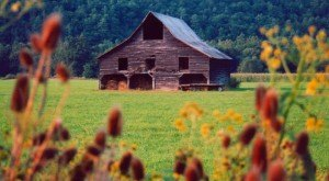 You Will Fall In Love With These 11 Old Barns In West Virginia