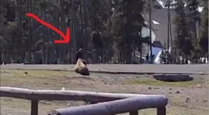 You Won't Believe What This Woman Just Did In Yellowstone National Park