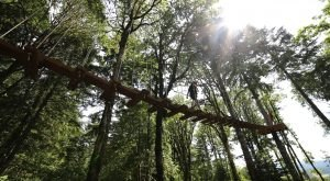 This Canopy Walk In Oregon Will Make Your Stomach Drop
