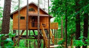 You'll Never Forget Your Stay In These 12 One Of A Kind Arkansas Cabins