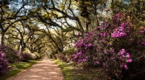 This Stunning Stroll Through St. Francisville Shows Off Louisiana's Unmatched Beauty