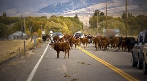 10 Things That Make People From Small Town Nevada The Best People