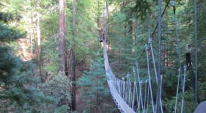 This Canopy Walk In Georgia Will Make Your Stomach Drop