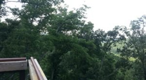 This Canopy Walk In Kentucky Will Make Your Stomach Drop