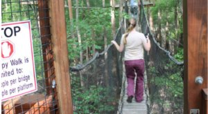 A Canopy Walk In South Carolina, Lynches River County Park Will Make Your Stomach Drop