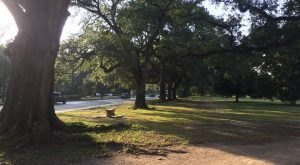 7 Trails In New Orleans You Must Take If You Love The Outdoors