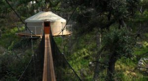 This Canopy Walk In Texas Will Make Your Stomach Drop