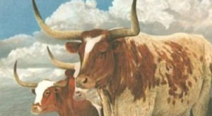 9 Stunning Art Prints Of Texas Mascots Revisited In The Wild