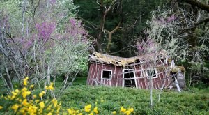 17 Abandoned Places in Northern California That Nature Is Reclaiming