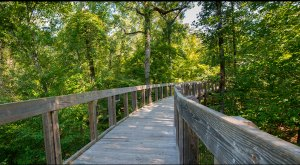 These 9 Trails In Louisiana Will Lead You To Unforgettable Places
