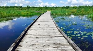 This Little Known Natural Oasis Is Hiding In Louisiana…And You're Going to Love It