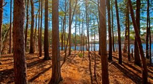 12 Trails In Massachusetts You Must Take If You Love The Outdoors