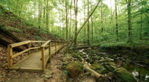 An Easy Hike In Georgia, Cascade Springs Nature Preserve Bursts With Natural Beauty
