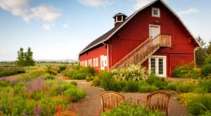 There's A Little Known Unique Farm In Denver… And It's Truly Amazing