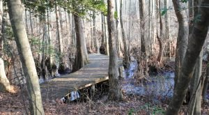 14 Trails In Delaware You Must Take If You Love The Outdoors