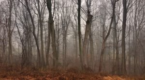12 Eerie Shots In Delaware That Are Spine-Tingling Yet Magical