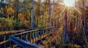 These 10 Mississippi Boardwalks Will Lead You To Unforgettable Places