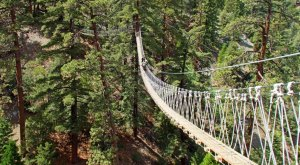This Canopy Walk In Southern California Will Make Your Stomach Drop