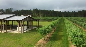 13 Amazing Louisiana Farms Where You Can Savor Country Life