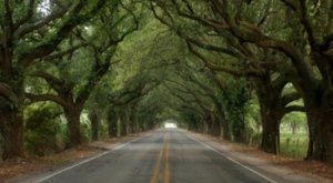 These 7 Beautiful Byways In Louisiana Are Perfect For A Scenic Drive