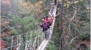 This Canopy Walk in West Virginia Will Make Your Stomach Drop