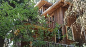 This Treehouse In Wyoming Will Give You An Unforgettable Experience