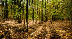 Spend The Night At Mississippi's Most Haunted Campground For A Truly Terrifying Experience