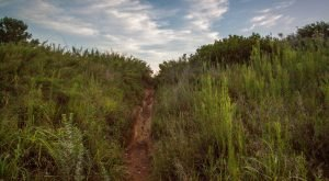 This Hike In Kansas Will Make You Feel Like A Hero
