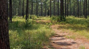 If You Love The Outdoors, Avoid These 12 Forests In The U.S., They're Not What You Think…
