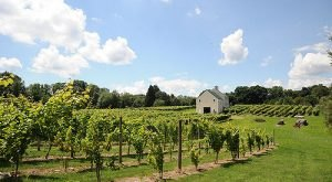 These 7 Beautiful Vineyards in New Hampshire Are A Must-Visit For Everyone