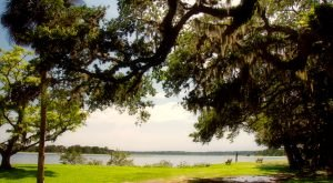 You Haven't Lived Until You've Experienced This One Incredible Park In Florida