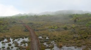 Hawaii Has A Magnificent Swamp Trail And You'll Definitely Want To Hike It
