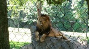 One Of The Best Zoos In The Nation Is Right Here In New Jersey…And You'll Want To Visit