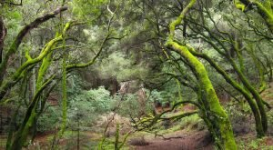 10 Incredible Hikes Under 5 Miles Everyone Around San Francisco Should Take