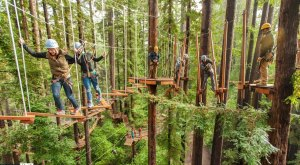 This Canopy Walk Near San Francisco Will Make Your Stomach Drop