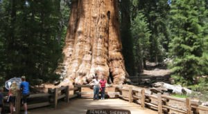 12 Incredible Almost Unbelievable Facts About Northern California