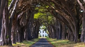 12 Marvels In Northern California That Must Be Seen To Be Believed