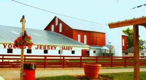 A Trip To Ohio's Favorite Dairy Farm Will Make You Feel Like A Kid Again