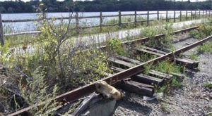 You've Never Experienced Anything Like This Epic Abandoned Railroad Trail In Rhode Island