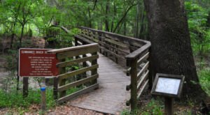 8 Trails In Florida You Must Take If You Love The Outdoors
