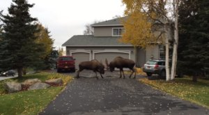 Only In Alaska Will You See Something Like This In Your Backyard