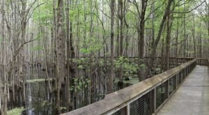 There's A Little Slice Of History Hiding In This Swamp In Arkansas