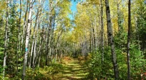 Part of the North Country Trail Runs Through Wisconsin…And It is Beautiful