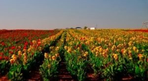 Horn Canna Farm In Oklahoma Is Picture Perfect For A Summer Day Trip