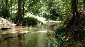 This Little Known Creek In Louisiana Is The Perfect Place To Get Away From It All