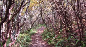 10 Easy Hikes To Add To Your Outdoor Bucket List In North Carolina