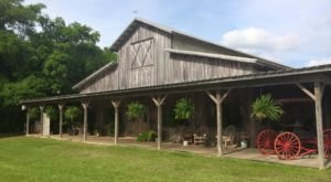 You'll Love These 9 Charming Farms Nestled In The Middle Of Nowhere In Alabama