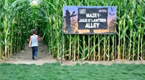 Get Lost In These 8 Awesome Corn Mazes In Utah This Fall